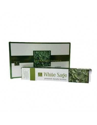 Balaji Salvia Blanca