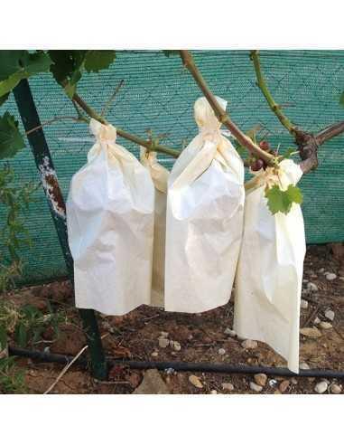 Bolsa de papel para uvas 35 X 25 cm