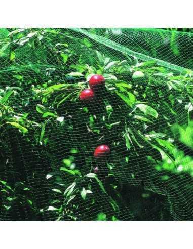 Aceite aromático Pachuli