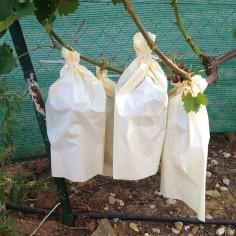 Bolsa de papel para uvas 35...